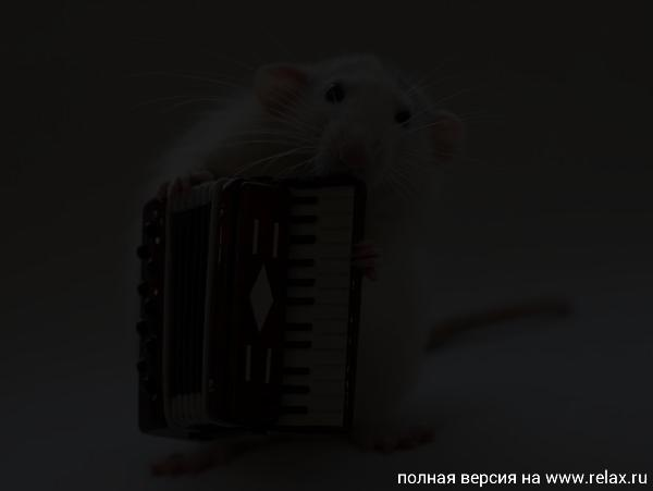 002_white_rats.jpg
