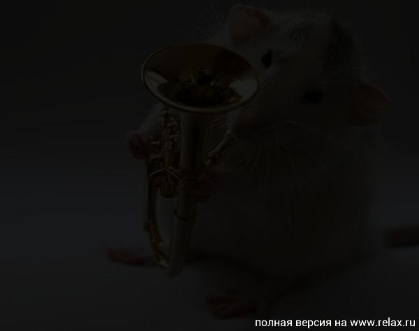 003_white_rats.jpg