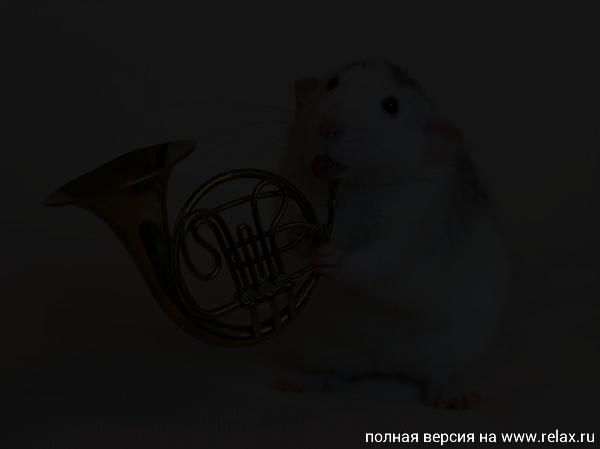 004_white_rats.jpg