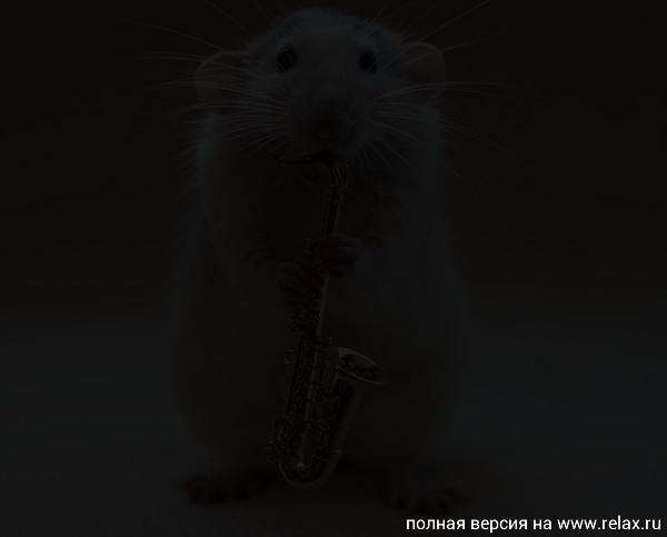 005_white_rats.jpg
