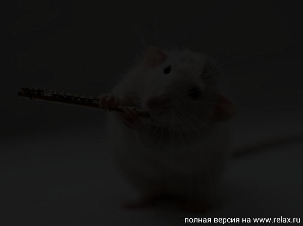 007_white_rats.jpg