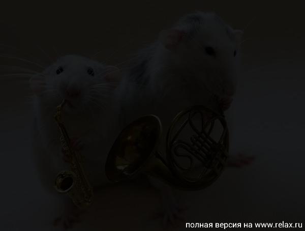 008_white_rats.jpg