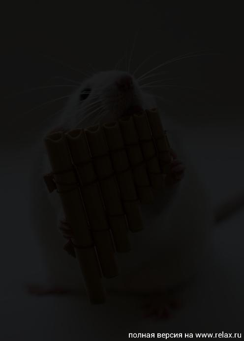 009_white_rats.jpg