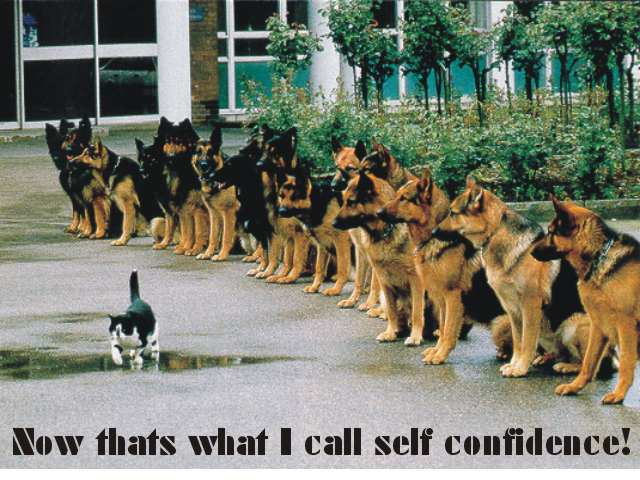 cookKomik_confidence.jpg