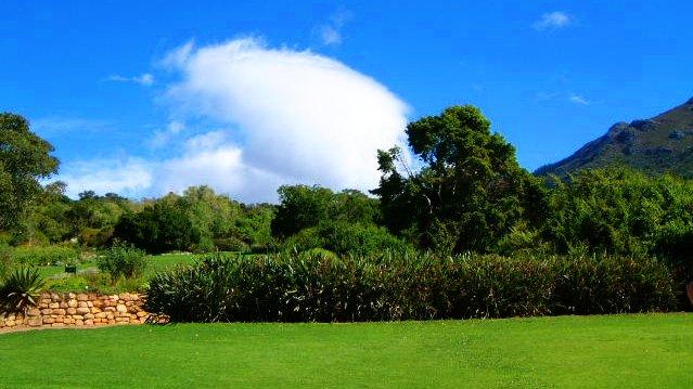 Kirstenbosch_lawn.JPG