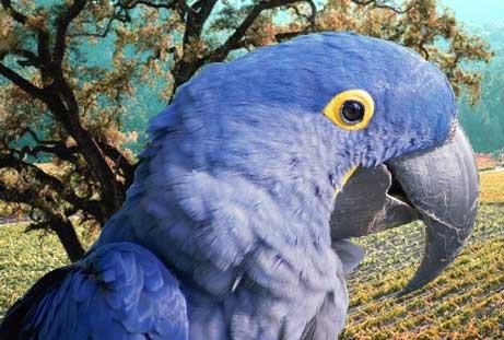 papagan-son2.jpg