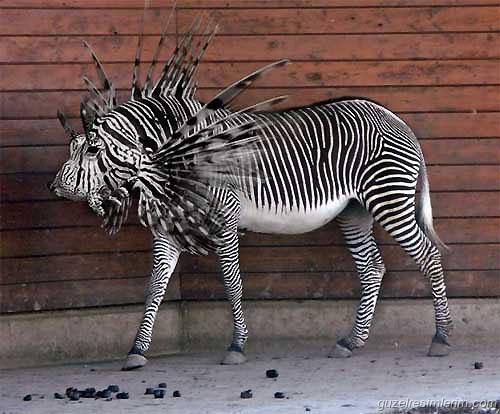 photoshop-animal-1.jpg