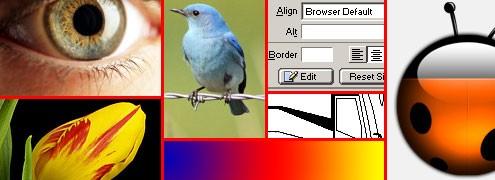 swf-high60jpg.jpg